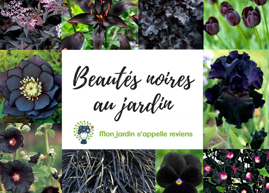 Des fleurs noires au jardin