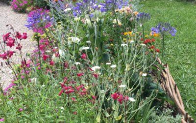 Un jardin haut en couleurs