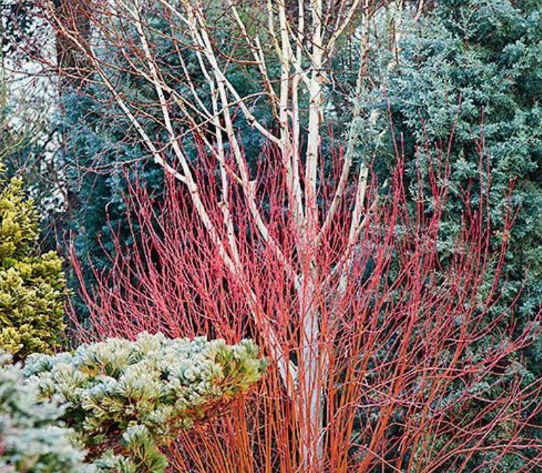 Créer un jardin coloré en hiver
