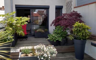 Végétaliser une terrasse à l'ombre