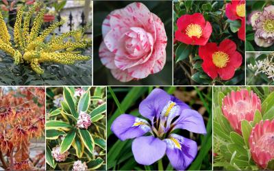 20 plantes qui fleurissent en hiver